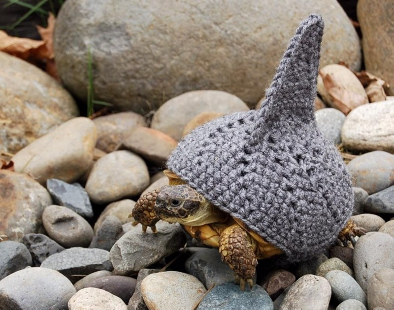 shark week costume - Turtle