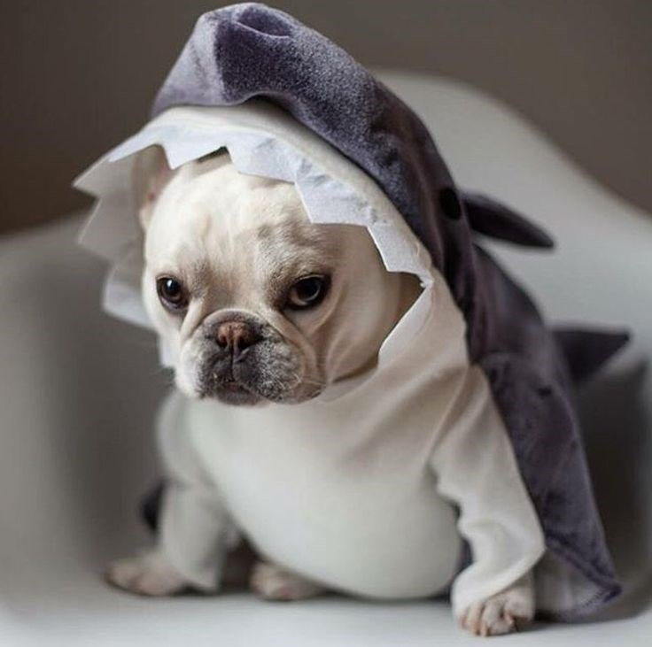 shark week costume - Dog