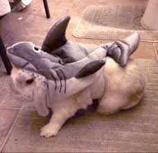 shark week costume - Canidae