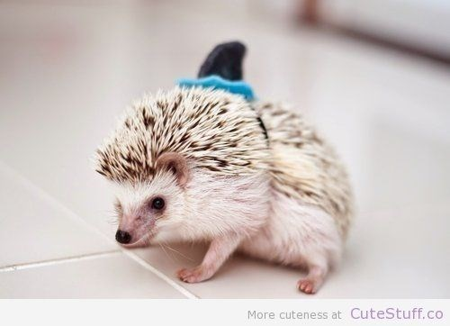 shark week costume - Erinaceidae - More cuteness at CuteStuff.co
