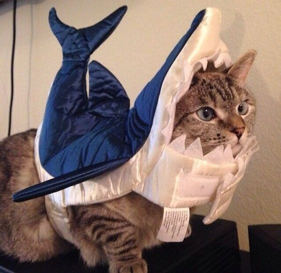 shark week costume - Cat
