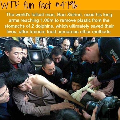 Team - WTF fun fact #4110 The world's tallest man, Bao Xishun, used his long arms reaching 1.06m to remove plastic from the stomachs of 2 dolphins, which ultimately saved their lives, after trainers tried numerous other methods. rope Sale