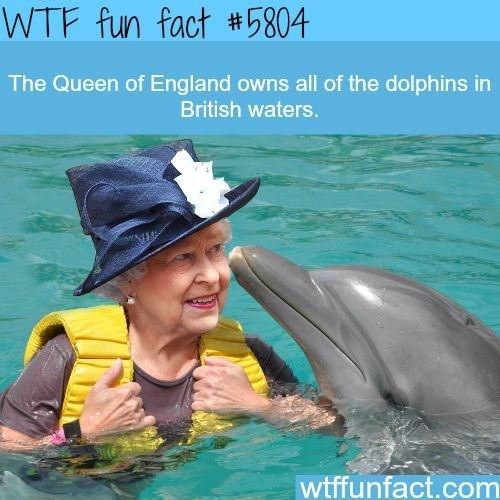 Dolphin - WTF fun fact #5804 The Queen of England owns all of the dolphins in British waters. wtffunfact.com