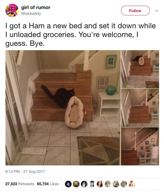 Product - girl of rumor Follow @bedsafely I got a Ham a new bed and set it down while I unloaded groceries. You're welcome, I guess. Bye. 8:13 PM - 27 Aug 2017 27,523 Retweets 65,754 Likes