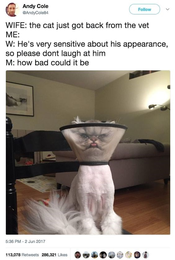 Photo caption - Andy Cole Follow @AndyCole84 WIFE: the cat just got back from the vet ME: W: He's very sensitive about his appearance, so please dont laugh at him M: how bad could it be 5:36 PM-2 Jun 2017 113,078 Retweets 286,321 Likes
