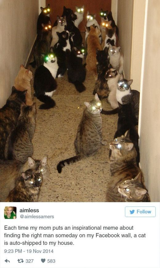 Cat - aimless Follow @aimlessamers Each time my mom puts an inspirational meme about finding the right man someday on my Facebook wall, a cat is auto-shipped to my house. 9:23 PM -19 Nov 2014 t 327 583
