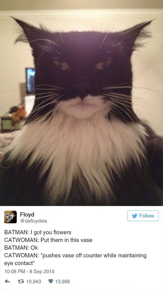 "Cat - Floyd @dafloydsta Follow BATMAN: I got you flowers CATWOMAN: Put them in this vase BATMAN: Ok CATWOMAN: ""pushes vase off counter while maintaining eye contact 10:08 PM 8 Sep 2015 10,943 13,988"