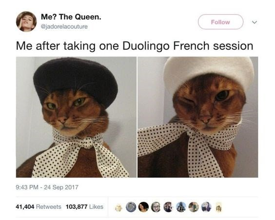 Cat - Me? The Queen. Follow @jadorelacouture Me after taking one Duolingo French session 9:43 PM-24 Sep 2017 41,404 Retweets 103,877 Likes
