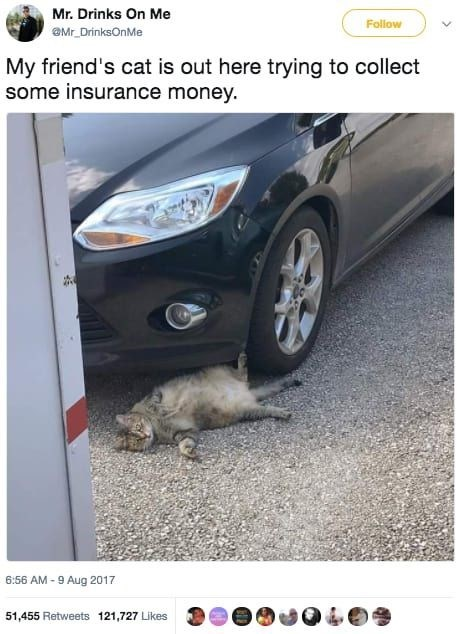 Vehicle door - Mr. Drinks On Me Follow Mr DrinksOnMe My friend's cat is out here trying to collect some insurance money. 6:56 AM-9 Aug 2017 51,455 Retweets 121,727 Likes