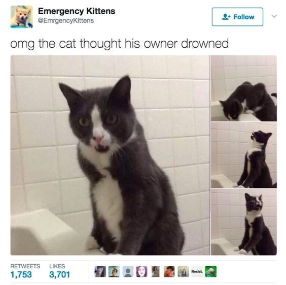 Cat - Emergency Kittens @EmrgencyKittens Follow omg the cat thought his owner drowned RETWEETS LIKES Resist 1,753 3,701