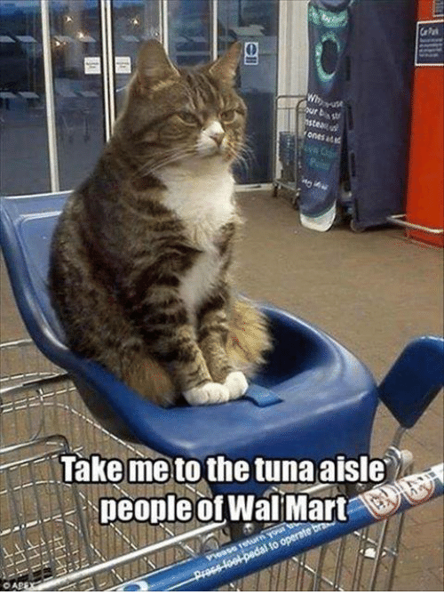 Walmart Meme - Cat - CaPk Wh ur bs nstea ones at Take me to the tunaaisle people of WalMart Procs fool pedal to operste br
