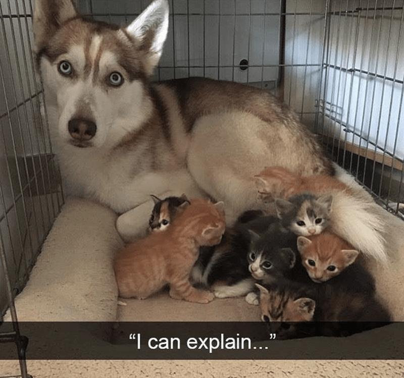 "Mammal - ""I can explain..."""