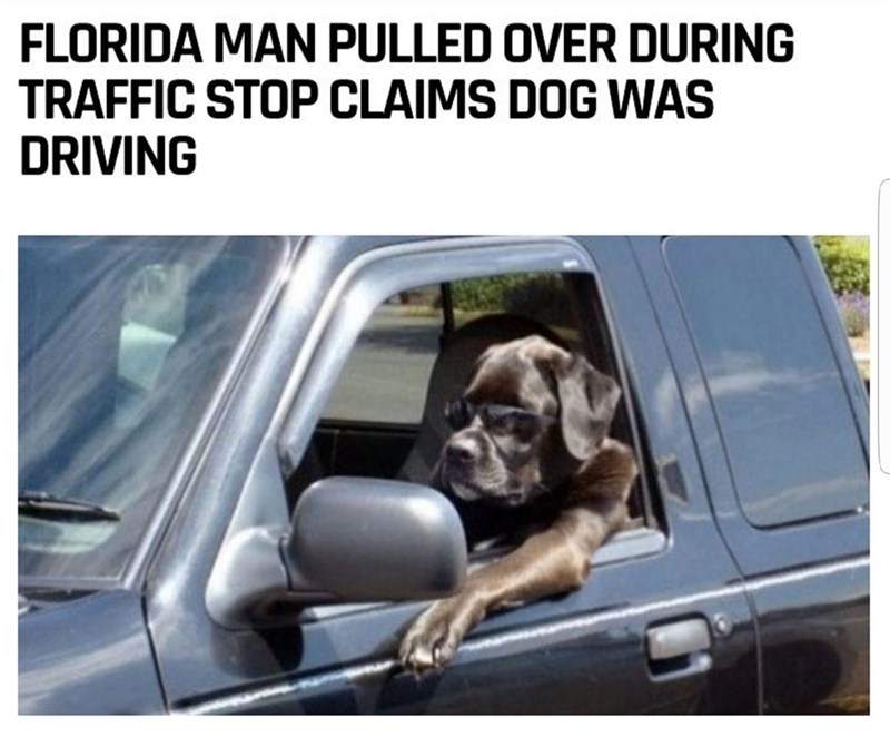 Motor vehicle - FLORIDA MAN PULLED OVER DURING TRAFFIC STOP CLAIMS DOG WAS DRIVING