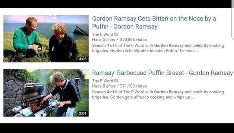 Funny meme about gordon ramsay and puffins.