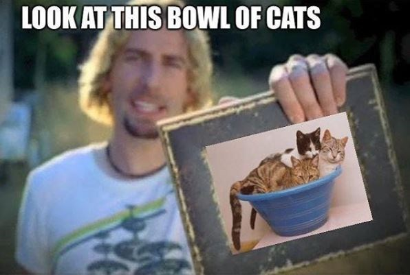 nickelback meme - Organism - LOOK AT THIS BOWL OF CATS