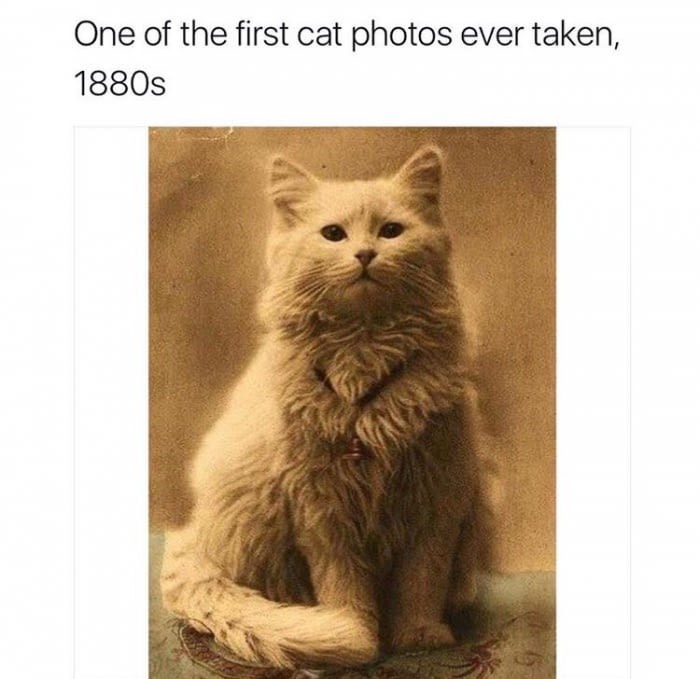 cute cat vintage - Cat - One of the first cat photos ever taken, 1880s