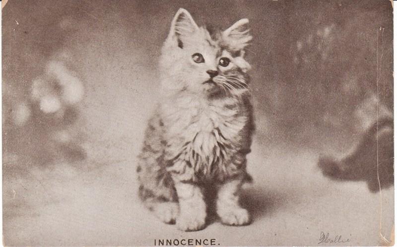 cute cat vintage - Cat - INNOCENCE.