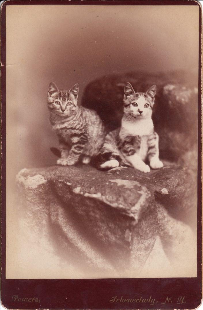 cute cat vintage - Cat - Schenectady, N. Pomers,