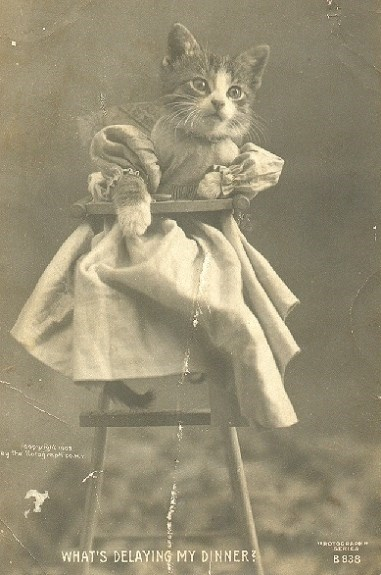 cute cat vintage - Photograph - ag the tofanrp cea ROTOGRA ERIEA WHAT'S DELAYING MY DINNER B 838