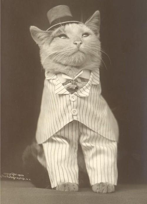 cute cat vintage - Cat - copyright iqo0 veRotograph(o.T