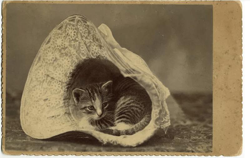 cute cat vintage - Cat