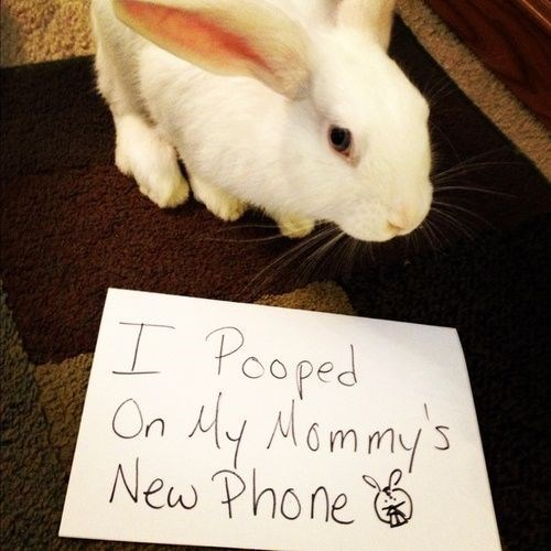 Rabbit - I Peoped On Ay Mommy's New Phone