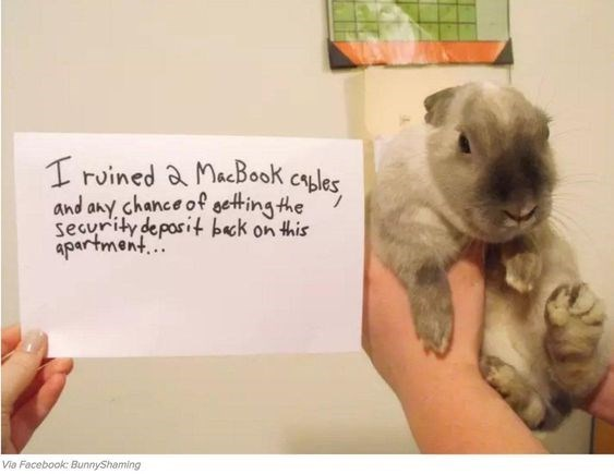 Puppy - I ruined & MacBook cyles and any chance of geting he security deposit beck on this apartment. Via Facebook: BunnyShaming