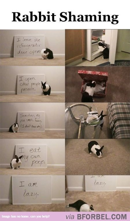Furniture - Rabbit Shaming Ileave the refigerator door ofen I open other people pesens Sodar ay (idut t I eat ny poop Own Iam lazy via BFORBEL.COM Image has no home, can you help?