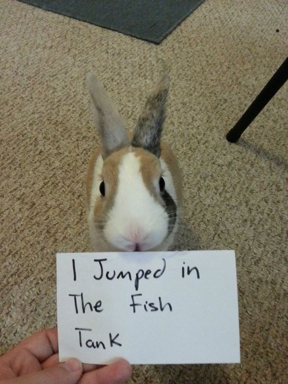 Rabbit - Jumped in The Fish TanK