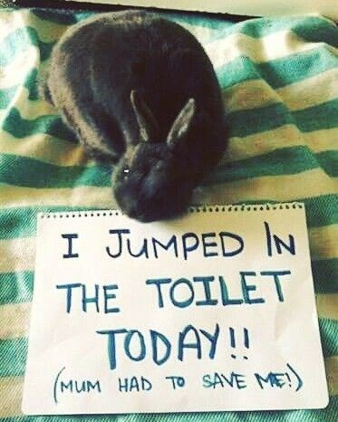 Photo caption - I JUMPED IN THE TOILET TODAY!! MUM HAD TO SAVE ME
