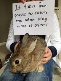 Rabbit - It takes four people to catch me when Play time is over!