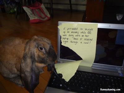 Rabbit - s grteded to e to mamamy wnile sie datq wore on hec hee ibbled net thrah a cord was Bunnyshaing.com