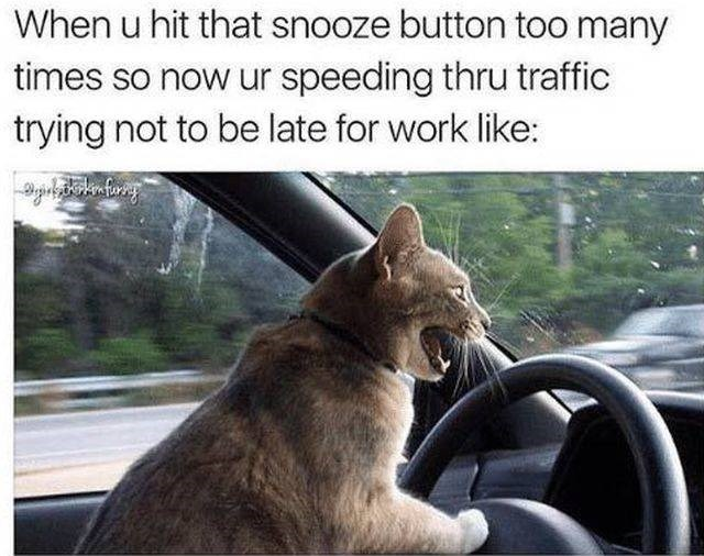 work meme - Cat - When u hit that snooze button too many times so now ur speeding thru traffic trying not to be late for work like: