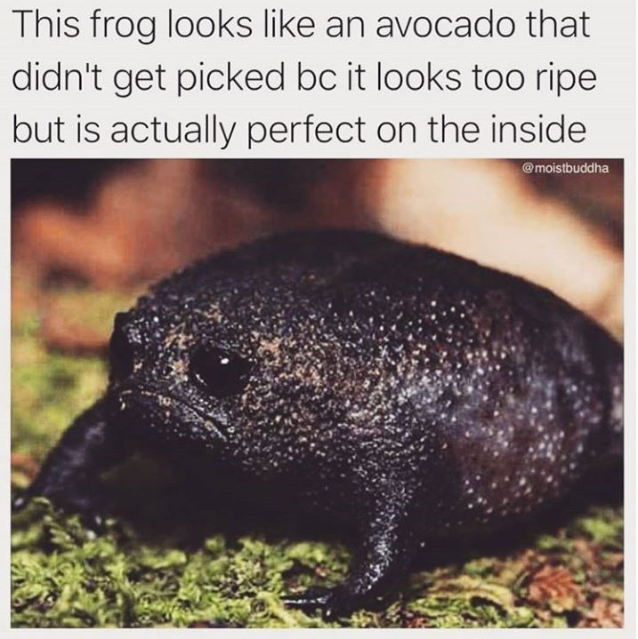 avocado meme - Terrestrial animal - This frog looks like an avocado that didn't get picked bc it looks too ripe but is actually perfect on the inside @moistbuddha