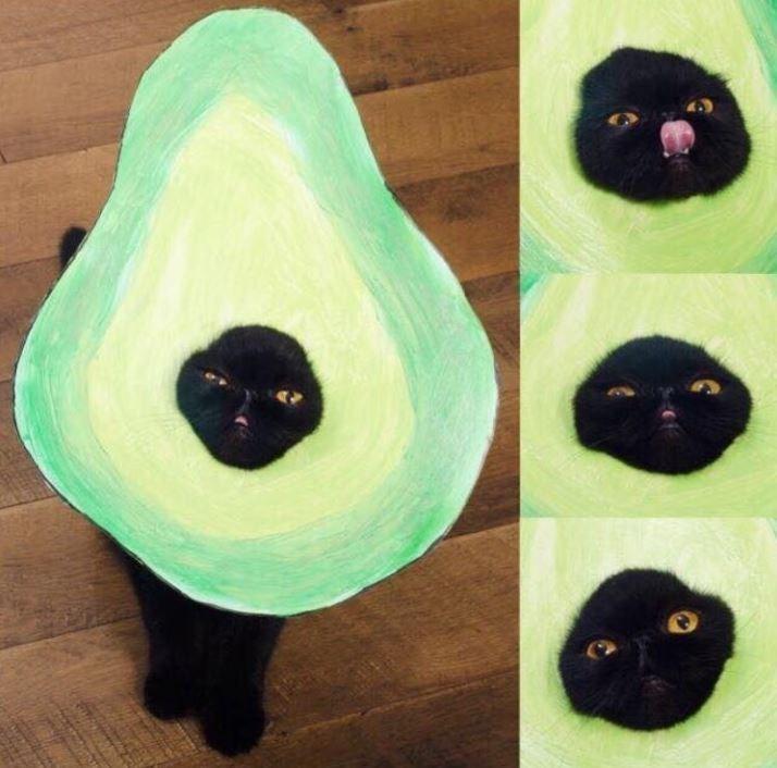 avocado meme - Black cat
