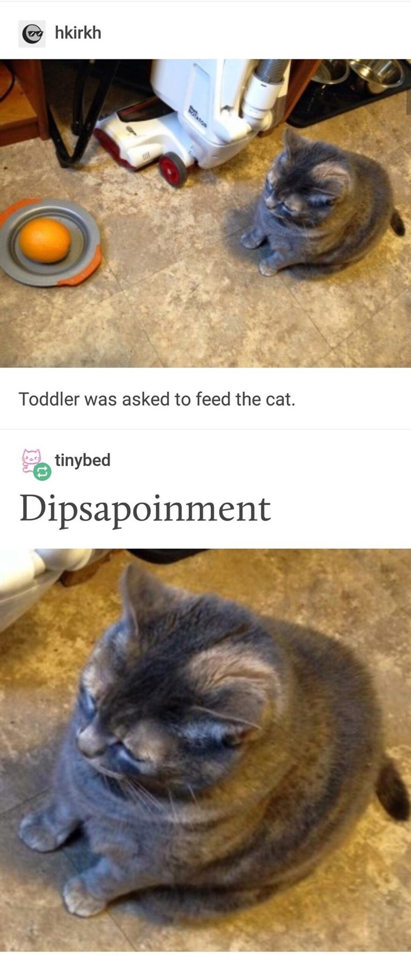 Wednesday meme Tumblr thread showing cat looking sadly at an orange in its food bowl