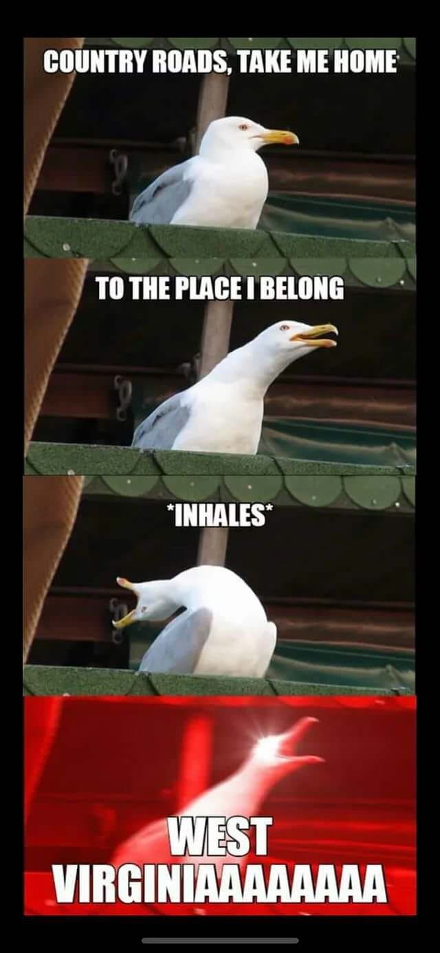 "Wednesday meme Inhaling Seagull meme about the song ""Take Me Home, Country Roads"" by John Denver"