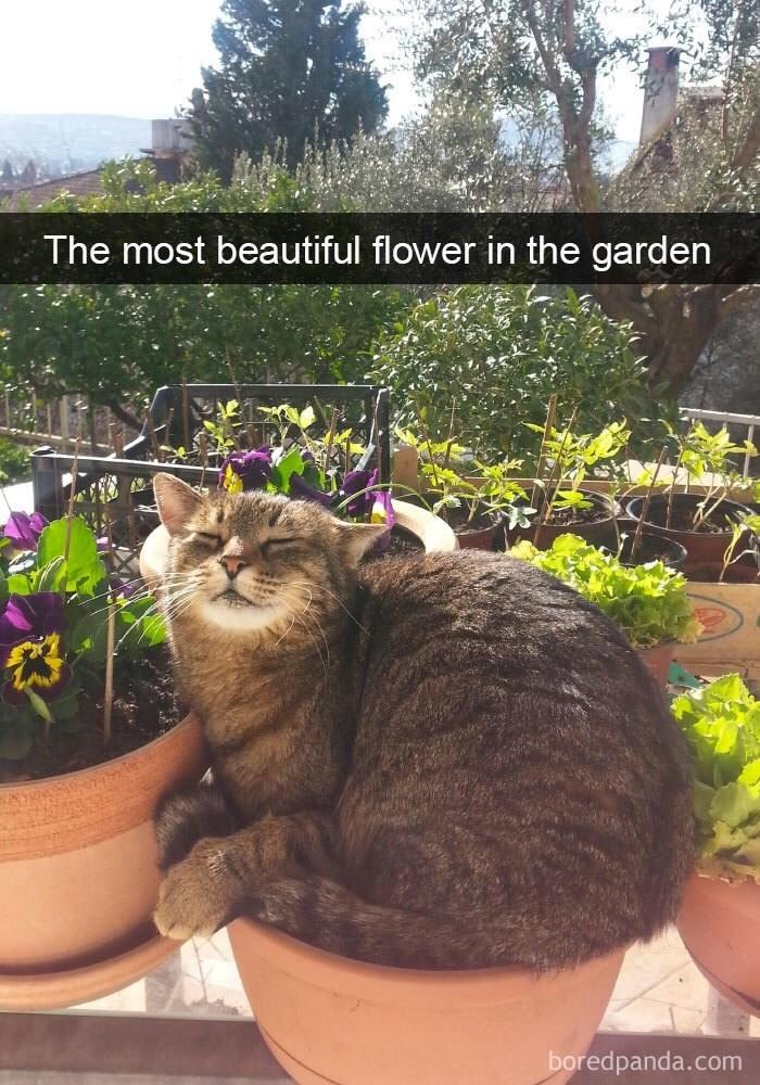 Wednesday meme Snapcaht of cat sitting in a flower pot