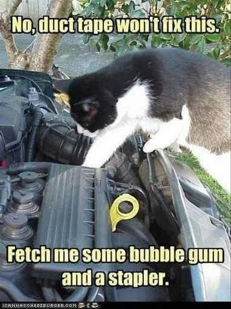 Caturday meme with pic of a cat fixing a car engine