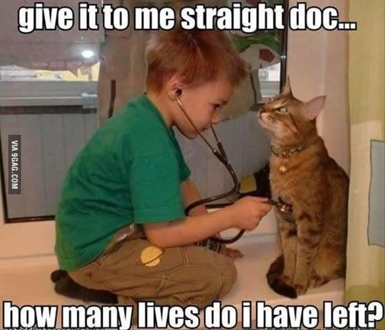 Caturday meme with pic of a child giving a medical exam to a cat