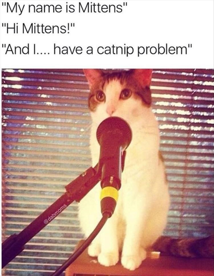 Caturday meme about a support group for catnip abusers