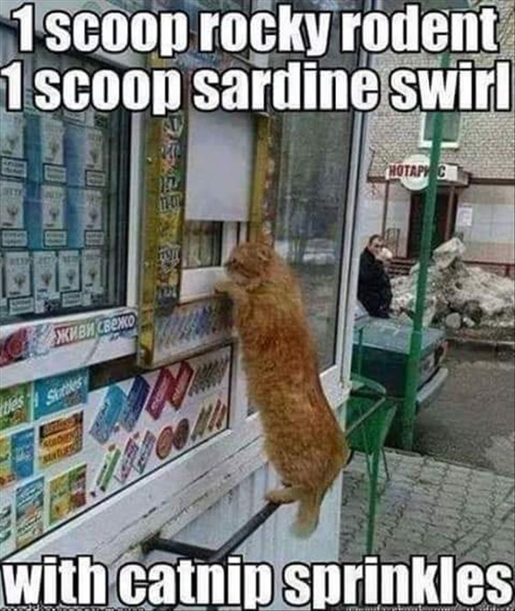 Caturday meme with pic of a cat ordering an ice cream from a truck
