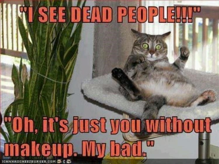 Caturday meme with a cat making fun of how you look