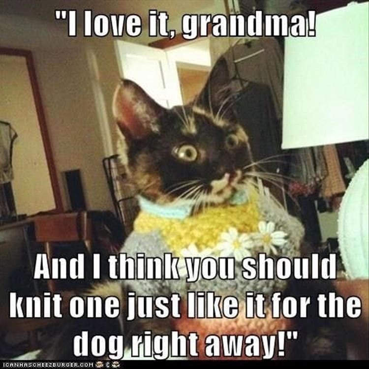 Caturday meme about getting an ugly sweater from grandma