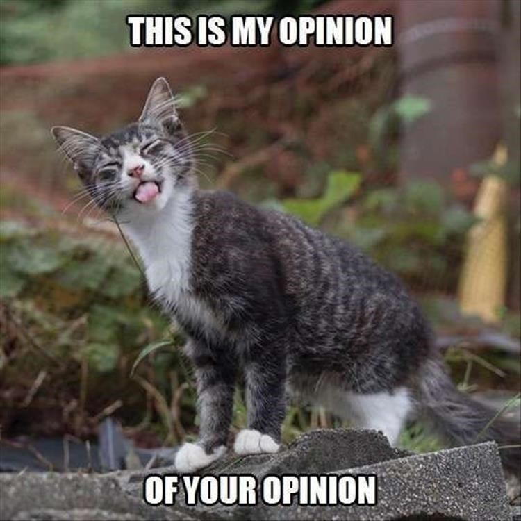 Caturday meme about a cat disrespecting your opinion
