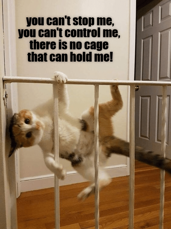 Dog - you can't stop me, you can't control me, there is no cage that can hold me!