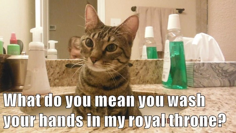 Cat - What do you mean you wash your hands in my royalthrone