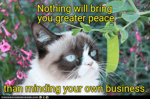 Cat - Nothing will bring you greater peace than minding your own business. CANHASCHEE2EURGER cOM