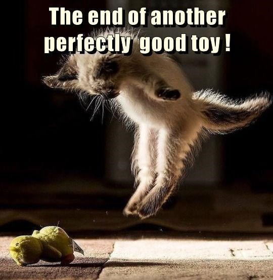 Photo caption - The end of another perfectly good toy!