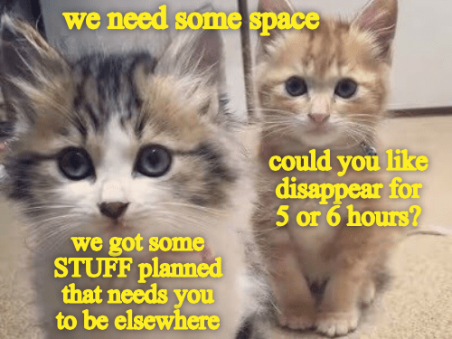 Cat - we need some space could you like disappear for 5 or 6 hours? we got some STUFF planned that needs you to be elsewhere